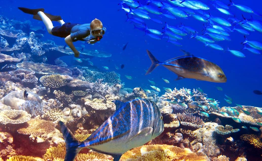 Potápění a šnorchlování na ostrově Réunion